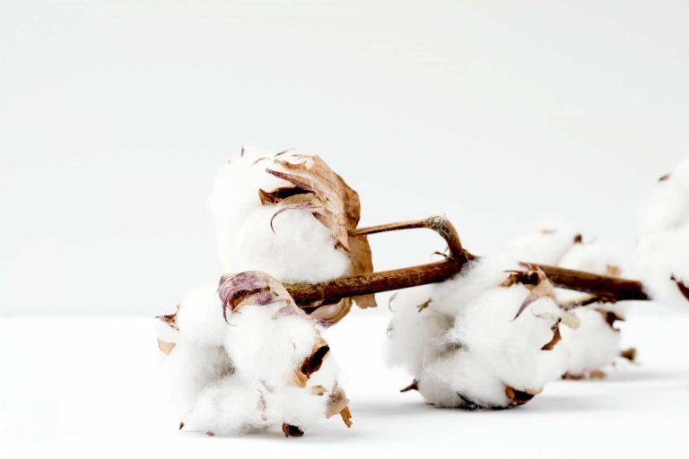 Is Organic Cotton Good For Eczema?